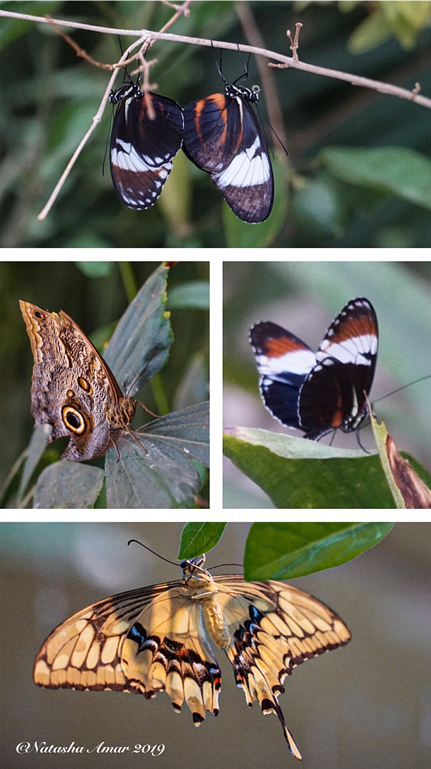 AlNoorIsland_Butterflies